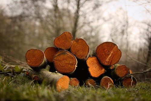 35/365 Some logs [explored] | by Richard Cunningham