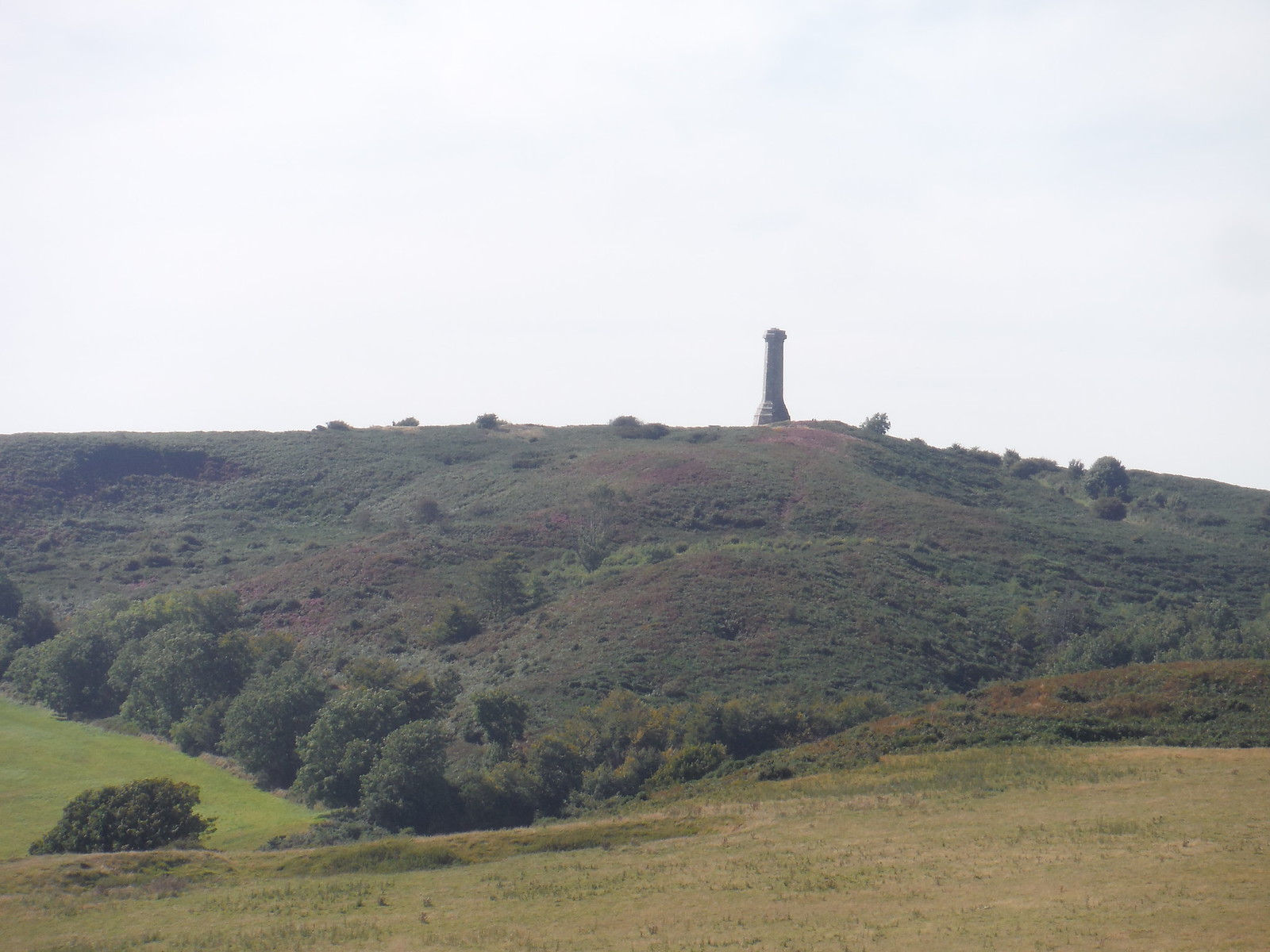 Hardy Monument & Black Dowm, from Bronkham Hill SWC Walk 275 Dorchester South Circular or to Portesham