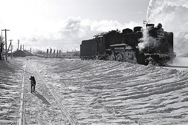 Steam Locomotive and Dog 蒸気機関車と犬 - 健一松本が撮影した写真 - 采取松本健一的照片