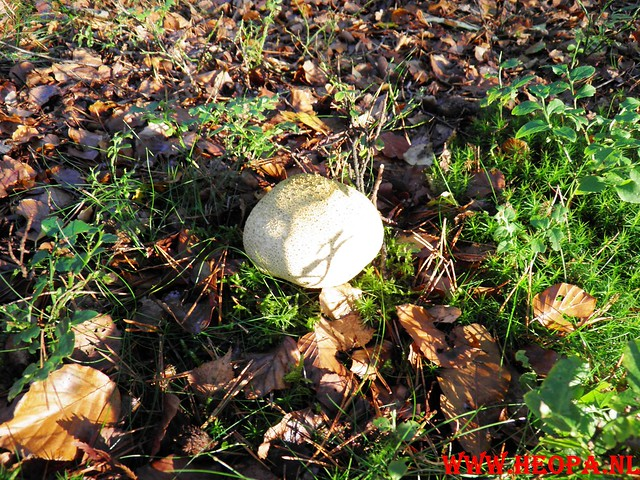 22-10-2011             Driebergen         26 km (47)