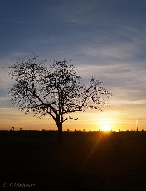Sunset & Tree