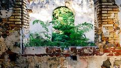 St Thomas - Brewers Bay - Window by tenkai2002