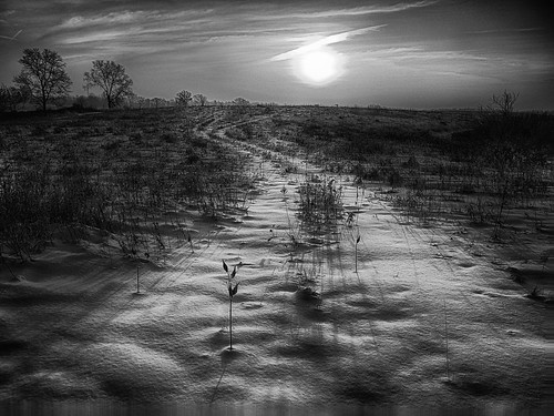 winter sun white snow black field clouds sunrise silver path tracks pro nik hydra app iphone efex iphoneography