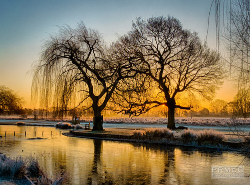 uk winter england colour sunrise landscape photography unitedkingdom hdr bushypark hamptonwick a6000