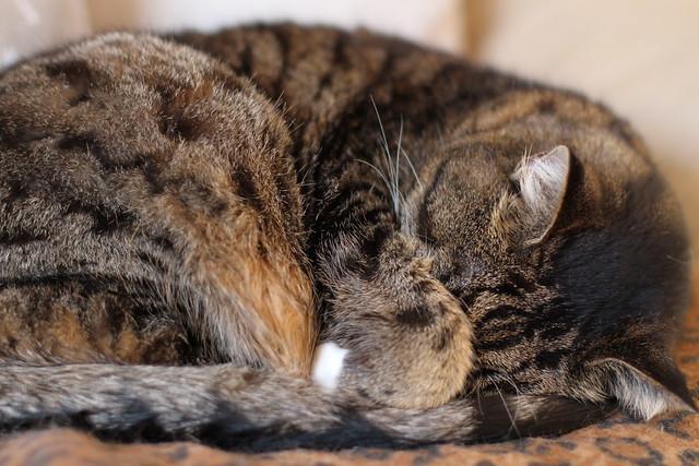 10/365: It's a cat's life