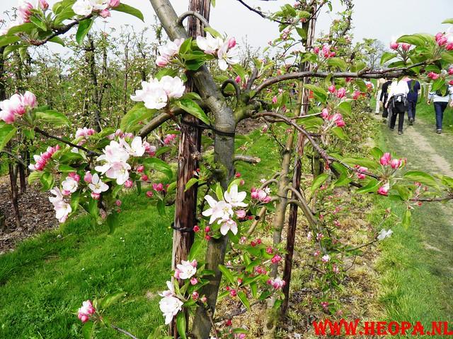16-04-2011     Rode-Kruis   Bloesem   wandeltocht 26 Km (64)