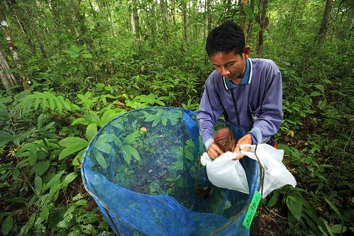 Tue, 11/20/2007 - 11:10 - Huay Kha Khaeng Wildlife Sanctuary/ Thailand. Image from the 50 ha permanent observaton plot of the CTFS.