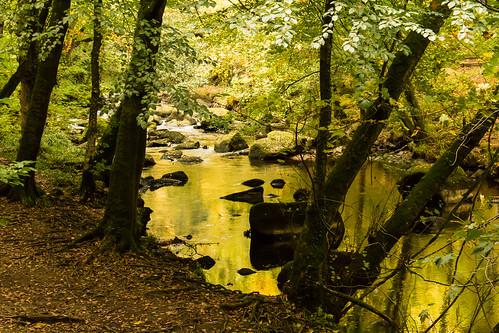 gold golden water river stream riverbank trees rocks reflection nature woodland landscape autumn outdoor riverteign devon england uk dartmoor nationalpark