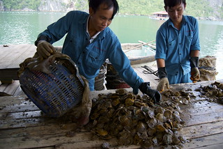 Pearl Farmers of Halong | by Victoria Louise Hockley