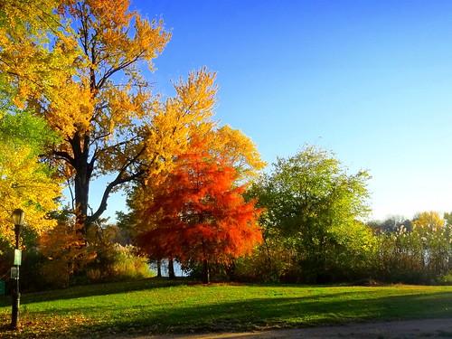 autumn newyork brooklyn image prospectpark dmitriyfomenko fall52014