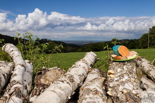 skåne timber björk sverige lumber timmer stockphoto fika carlzeiss contax645 båstad lensadapter bjärehalvön distagon3535 axelstorp projectfika