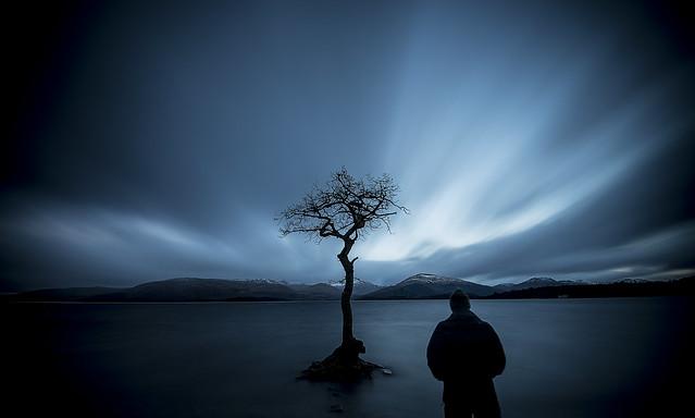 im wondering why the tree is alone....Milarrochy bay Loch Lomand Scotland