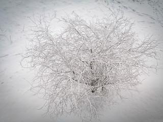 Snow Tree | by EuroSlice