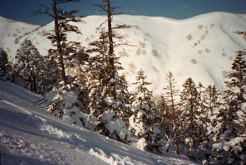 trees white snow film japan skiing 日本 kagura 雪 olympusxa filmphotography kodakportra400 フィルム 新潟県 niigataprefecture かぐら かぐらスキー場
