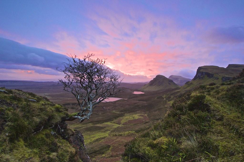 Quiraing Tree, Isle of Skye.