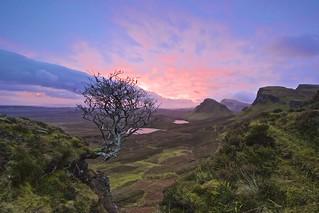 Quiraing Tree, Isle of Skye. | by Chris Golightly