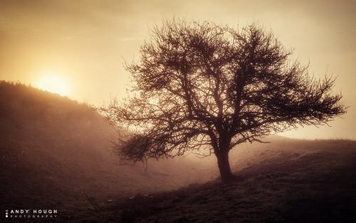 light orange sun mist tree fog sunrise golden ditch sony burning goldenhour a77 wittenhamclumps southoxfordshire sonyalpha andyhough earthtrust slta77 andyhoughphotography