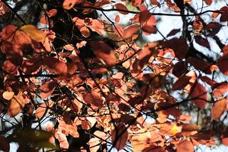 Yosemitel-Park-11-3-09 (13) | by gideonariel1