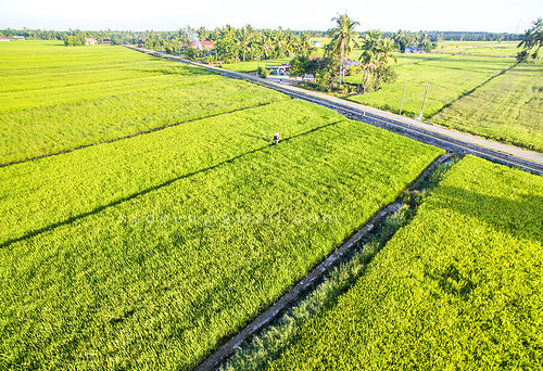 agribusiness agriculture business chemical commercial engine equipment farm farmer field green hat insecticide machinery opening paddy people plant pollutant pollute protective rice space spot spray summer tank toxic walk water worker aerial grass growth grow morning
