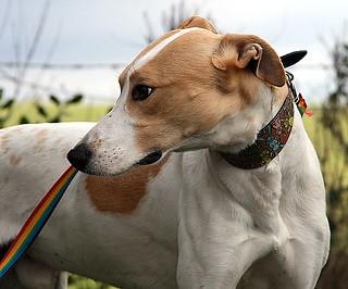 Lester   by Greyhound Gap