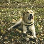 2007-10-28_12-47-48 - Dog Fun