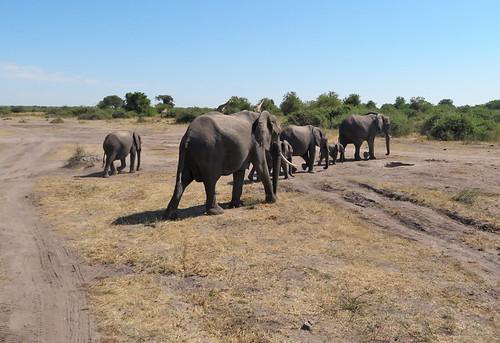 elephants-walking-away | by quirkytravelguy