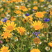 Field of flowers by madein.w