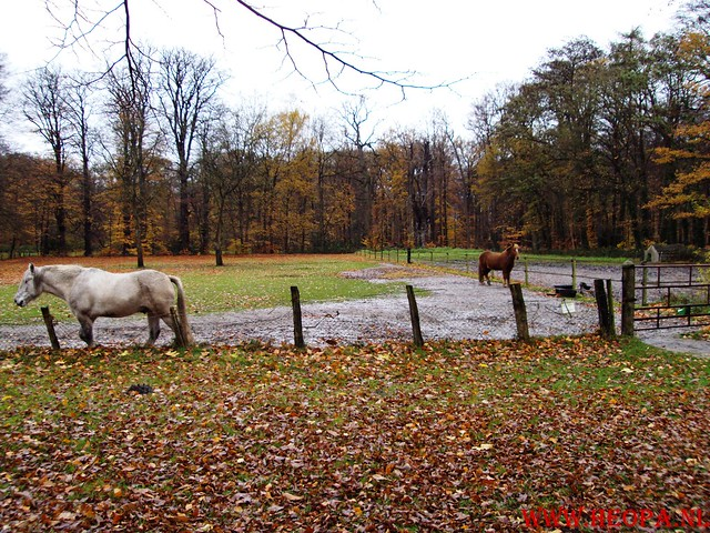 15-11-2009            Gooise lus       18.5 KM    NS Wandeltocht  (41)