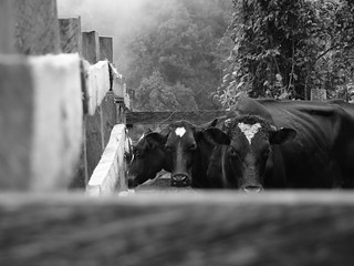 Colombia Rural por cayisn, Black and white | by cayisn