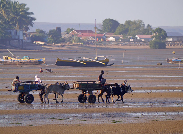 Zebu charrettes & fishing boats, Tulear