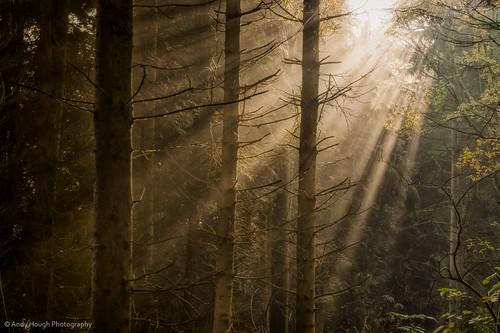 wood trees england sunlight sunshine forest woodland unitedkingdom sony rays sunrays wallingford conifers a77 sonyalpha andyhough slta77 littlewittenhamwood andyhoughphotography