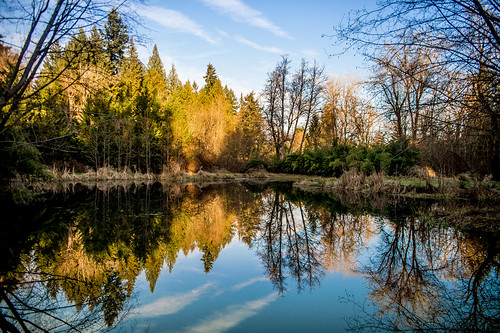 winter reflection vancouver mirror washington pond unitedstates northwest dormant