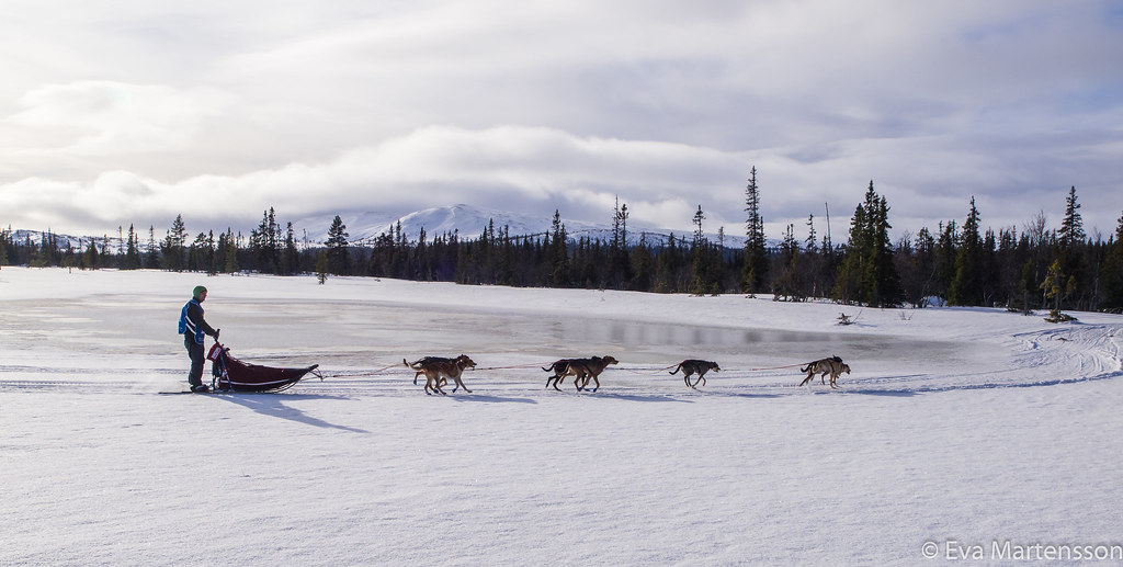 Jimmy Pettersson. Amundsen race leg 3, 22.02.2015