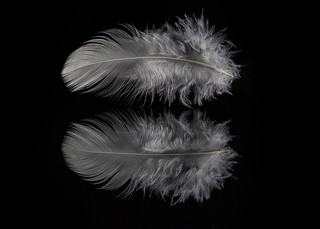White Feather: Moon Blessings [Explored] | by KellarW