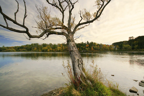 tree river dying calm overcast fall