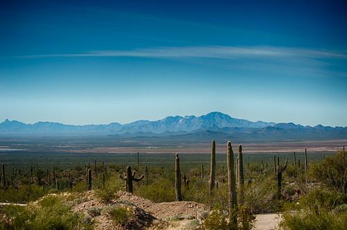 arizona museum unitedstates desert tucson desertmuseum