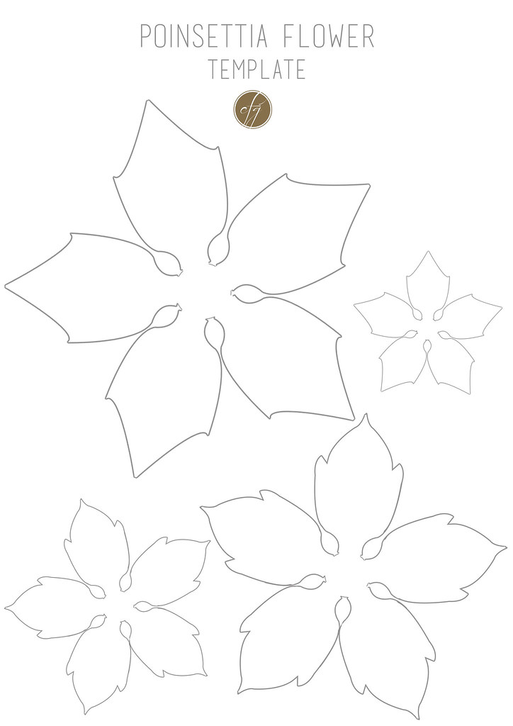 photo relating to Poinsettia Pattern Printable referred to as Poinsettia flower template III replica Novella Bragagna Flickr