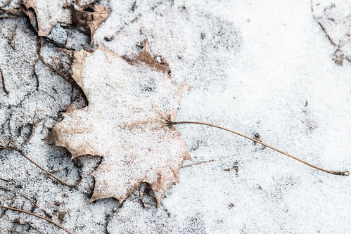 Leaf and Drift | by Sharon Mollerus