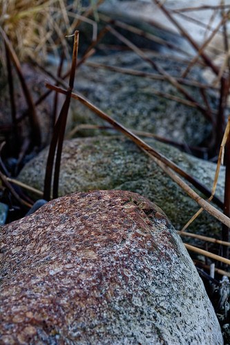 Rocks And Reed