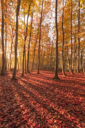 autumn trees japan forest sunrise niigata 2014 新潟 日の出 niigataken 美人林 bijinbayashi tōkamachishi