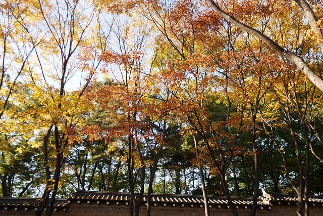 月, 2014-11-03 02:10 - 昌徳宮