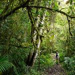 01 Viajfilos en Panama. Sendero Quetzal 10