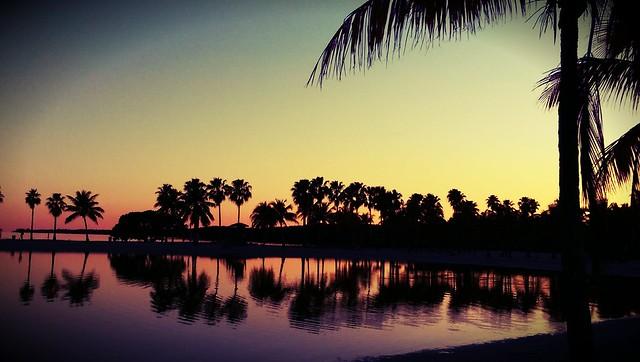 Miami Oasis