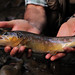 Fish-On---Abetone7
