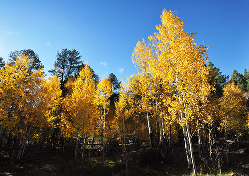 Williams District Fall Colors 2016 | by Kaibab National Forest Photography