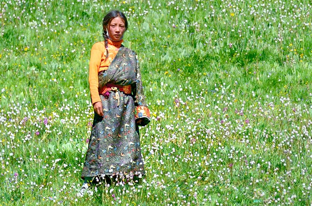 Dressed in a butterfly print, standing in a bed of flowers, Tibet 2014