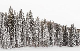 Sunset Lake Trees   by IntrepidXJ