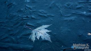 Blatt im Eis | Projekt | Tag 357