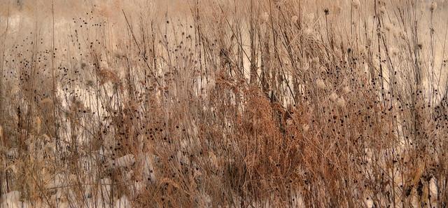 Wildflowers in Winter