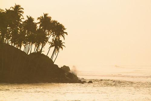 srilanka tropics travel vacation paradise adventure summer ocean culture surfing surfer water explore srilankan beach sand sunset sunrise mountains landscape town city local wallpaper nature mirissa aurgambay exotic palmtree silhouette
